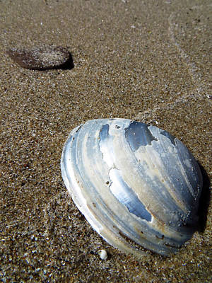 Photograph - Lake Erie Mussel Shell by Shawna Rowe