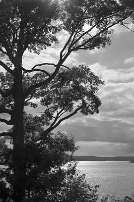 Photograph - Lake Framed By Trees In Black And White by Jane Eleanor Nicholas