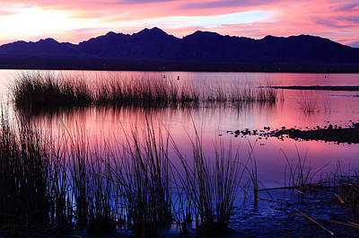 Photograph - Lake Havasu Sunset by Eric Foltz
