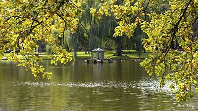 Lake In Boston Park Art Print by Alex King