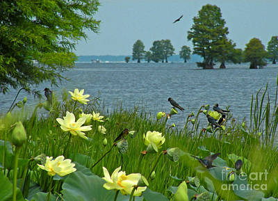Art Print featuring the photograph Lake Lotus And Swallows by Deborah Smith