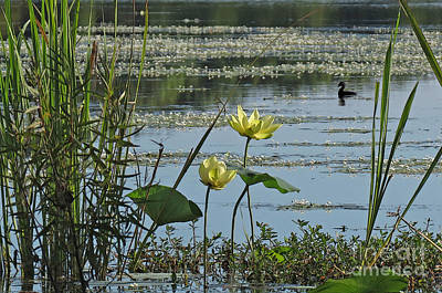 Art Print featuring the photograph Lake Marion Morning by Deborah Smith