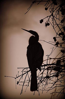 Photograph - Lake Morton Silhouette IIi by Laurie Perry