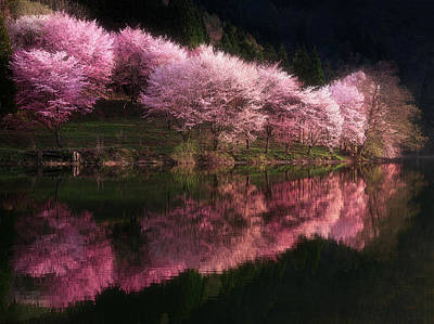 Cherry Blossoms Photograph - Lake Nakatsuna With Cherry Blossoms by Ace