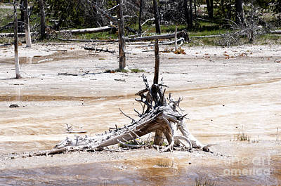 Photograph - Lake Of Death In Yellowstone by Brenda Kean