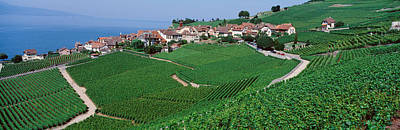 Pastoral Vineyard Photograph - Lake Of Geneva, Vineyards, Rivaz by Panoramic Images
