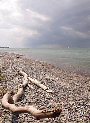 Photograph - Lake Ontario Driftwood by Tom Brickhouse