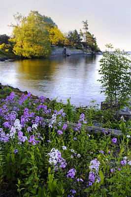 Photograph - Lake Ontario Flox by Jim Vance