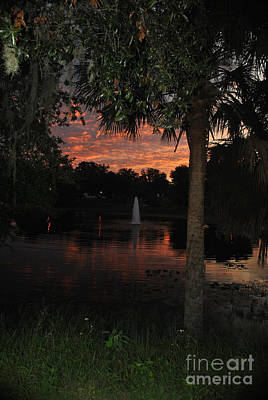 Photograph - Lake Play Florida by George D Gordon III