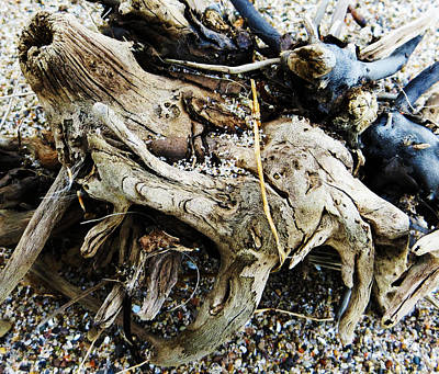Photograph - Lake Shore Curiosities  by Shawna Rowe