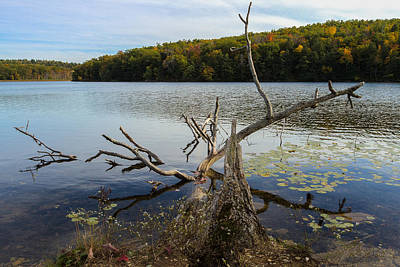 Photograph - Lake Taghkanic State Park by Steve Belovarich