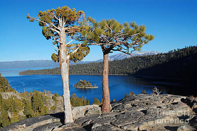 Photograph - Lake Tahoe Emerald Bay Natural Arbor by Debra Thompson