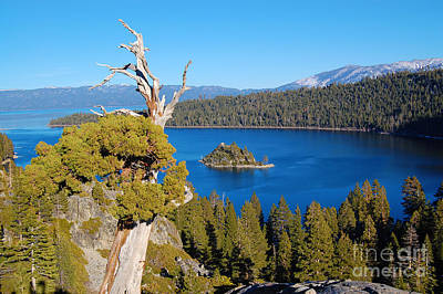 Photograph - Lake Tahoe Emerald Bay Reaching Tree by Debra Thompson