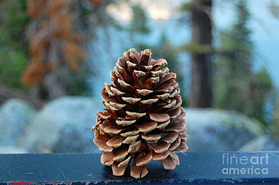 Photograph - Lake Tahoe Pine Cone by Debra Thompson