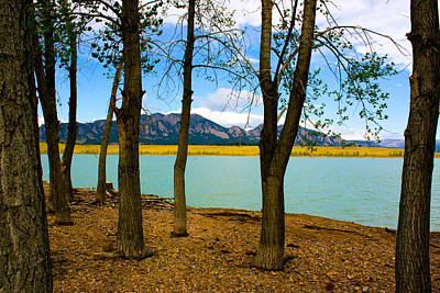 Lake Through The Trees Art Print