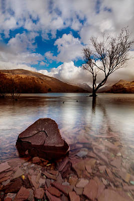 Photograph - Lake Tree And Rock Still by Beverly Cash