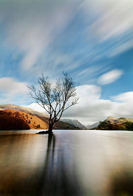 Photograph - Lake Tree by Beverly Cash