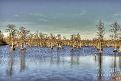 Photograph - Lake With Trees by Jonathan Harper
