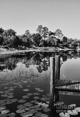 Pine Needles Photograph - Lakes Of Deland by Deborah Benoit