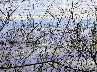 Photograph - Lakeside Branches by Michael Canning