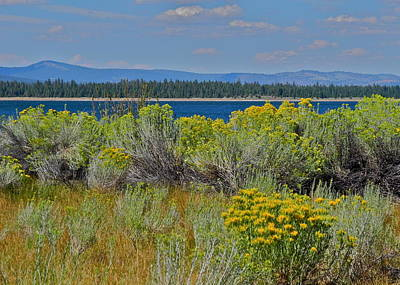 Photograph - Lakeside Plants At Eagle Lake by Kirsten Giving