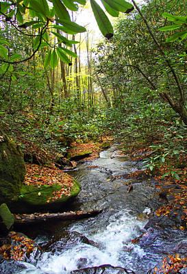 Photograph - Lamance Creek Vertical by Duane McCullough
