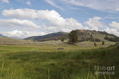 Art Print featuring the photograph Lamar Valley No. 2 by Belinda Greb
