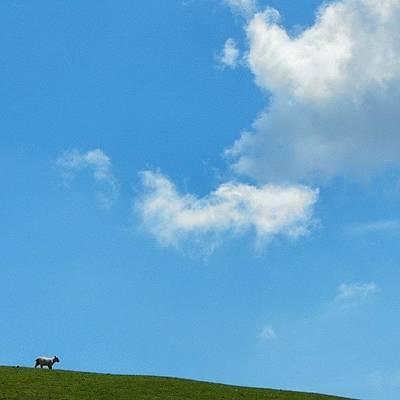 Sheep Photograph - #lamb #sheep #latergram #minimal by Alexandra Cook