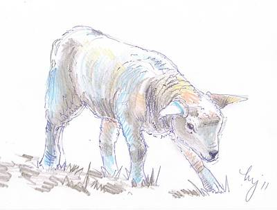 Sheep Drawing - Lamb Sketch by Mike Jory