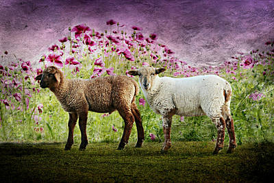 Poppies Field Mixed Media - Lambs by Heike Hultsch