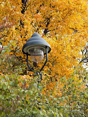 Lamp In The Autumn Leaves Art Print by Michal Boubin