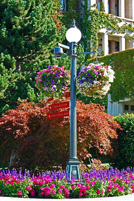 Photograph - Lamp Post And Hanging Baskets. Victoria B.c.  by Connie Fox