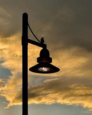 Photograph - Lamppost And Bird At Dusk by Joe Bonita
