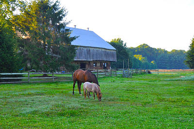 Pony Digital Art - Lancaster County Farm by Bill Cannon
