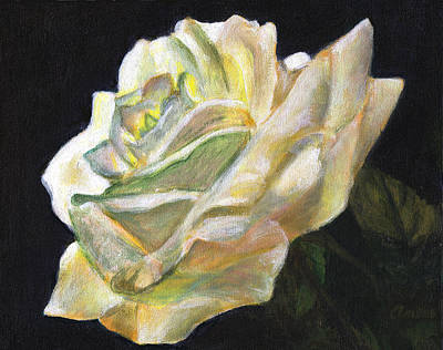 Summer Rose  Original