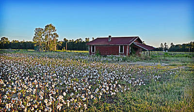 Photograph - Land Of Cotton by Linda Brown
