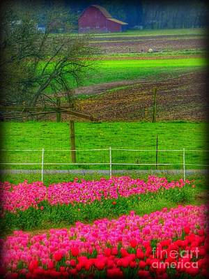 Photograph - Land Of Tulips by Susan Garren