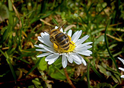 Photograph - Daisy And Bee by Nina Ficur Feenan