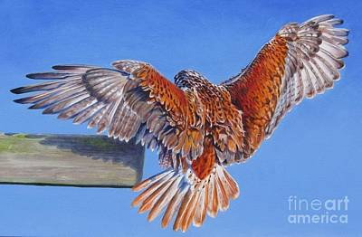Painting - Landing Hawk by Pat Burns