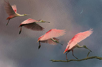 Spoonbill Digital Art - Landing by Hazel Billingsley