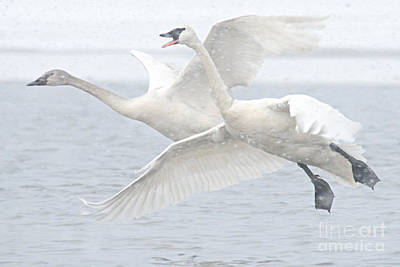 Photograph - Landing In The Snow by Larry Ricker