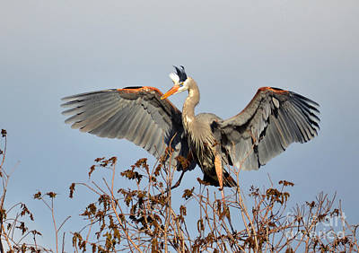 Photograph - Landing In The Tree Tops by Kathy Baccari