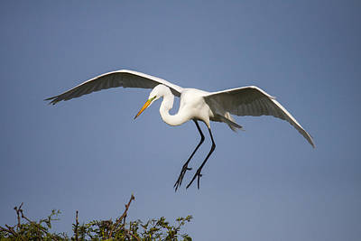 Photograph - Landing Stretch by Doug Lloyd