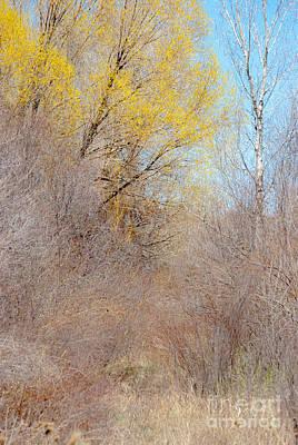 Earthship Photograph - Landscape A10j Taos Nm by Otri Park