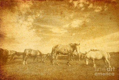 Damaged Photograph - Landscape And Horses On Vintage Grunge Paper by Michal Bednarek