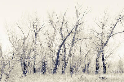 Earthship Photograph - Landscape E10f Taos Nm by Otri Park