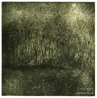 Painting - Mystical Landscape - Plants -reed - Botany - Biotope - Habitat - Etching - Fine Art Print - Stock Image by Urft Valley Art