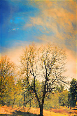 Photograph - Landscape In Blue And Yellow  by Douglas MooreZart
