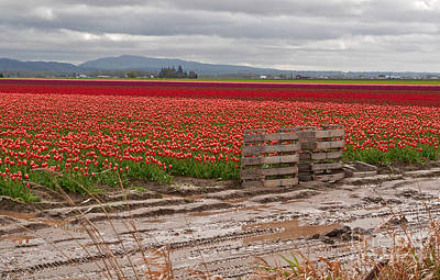 Photograph - Landscape Of Brilliant Tulip Fields by Valerie Garner