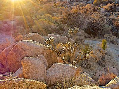Barker Digital Art - Landscape Of Cholla Cactus Catching Sunlight Along Barker Dam Trail In Joshua Tree Np-ca by Ruth Hager